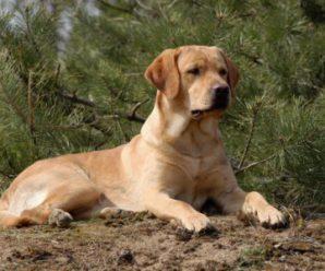 Отравление у собаки и как его предотвратить